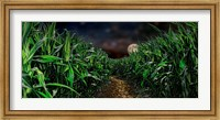 Dark corn field Fine-Art Print