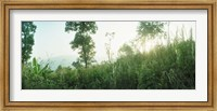 Sunlight coming through the trees in a forest, Chiang Mai Province, Thailand Fine-Art Print