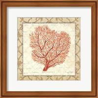 Coral Beauty Light III Fine-Art Print