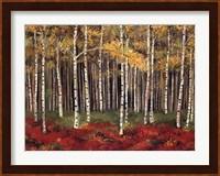 Aspen Forest Fine-Art Print
