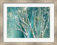 Blue Birch Fine-Art Print