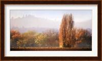 Vineyard Mist Fine-Art Print