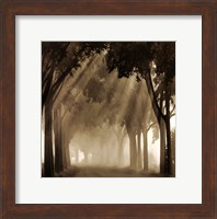 Misty Grove Fine-Art Print