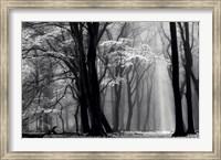 Winter is Coming Fine-Art Print