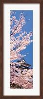 Hikone Castle w\cherry blossoms Shiga Japan Fine-Art Print