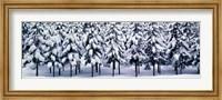Snow covered Cedar trees Kyoto Hanase Japan Fine-Art Print