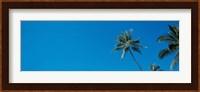 Palm trees Waikiki Oahu HI USA Fine-Art Print