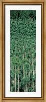 Kitayama Cedar trees Kyoto Japan Fine-Art Print