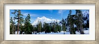 Trees on a snow covered mountain, Mt Shuksan, Mt Baker-Snoqualmie National Forest, Washington State, USA Fine-Art Print