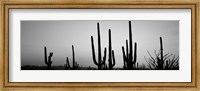 Black and White Silhouette of Saguaro cacti, Saguaro National Park, Arizona Fine-Art Print