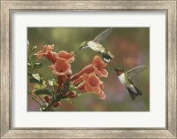 Hummingbirds and Trumpet Flowers Fine-Art Print