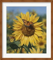 Sunflower/Butterflies Fine-Art Print