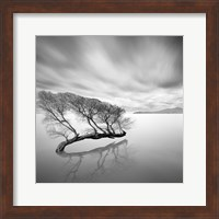 Water Tree VII Fine-Art Print
