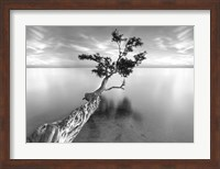 Water Tree XIII Fine-Art Print
