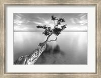 Water Tree XIII Fine-Art Print