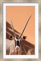Close-up of Oryx, Namib-Naukluft Park, Namibia, Africa Fine-Art Print