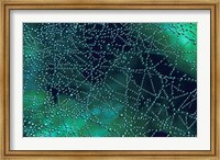 Dew Drops on Spider Web Fine-Art Print