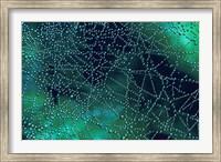 Dew Drops on Spider Web Fine-Art Print