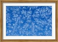 Pattern of Winter Frost on Glass Fine-Art Print
