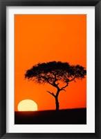 Single Acacia tree at sunrise, Masai Mara, Kenya Fine-Art Print
