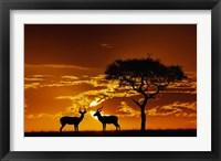 Umbrella Thorn Acacia and Impala, Masai Mara Game Reserve, Kenya Fine-Art Print