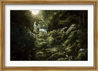 Aged boulders covered with moss in the Ritsa Nature Reserve Abkhazia Fine-Art Print