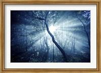 Sun rays in a dark forest, Liselund Slotspark, Denmark Fine-Art Print