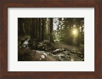 Small stream in a forest at sunset, Pirin National Park, Bulgaria Fine-Art Print