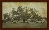 Sugarmill Oak, Louisiana Fine-Art Print