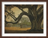 Two Oaks in Rain, Audubon Gardens Fine-Art Print