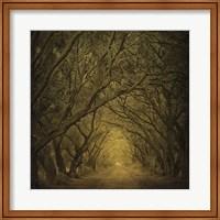 Evergreen Oak Alley (vertical view) Fine-Art Print