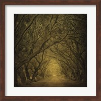 Evergreen Oak Alley (vertical view) Fine-Art Print