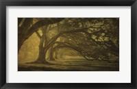 Oak Alley Morning Shadows Fine-Art Print