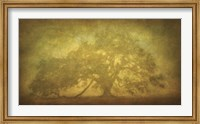 St. Joe Plantation Oak in Fog 3 Fine-Art Print