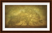 St. Joe Plantation Oak in Fog 3 Fine-Art Print