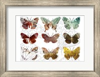 Layered Butterflies II Fine-Art Print