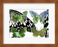 Layered Butterflies V Fine-Art Print