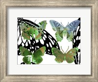 Layered Butterflies V Fine-Art Print