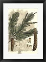 Antique Weymouth Pine Tree Fine-Art Print