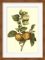 Bessa Apple Fine-Art Print