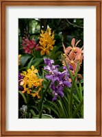 Singapore. National Orchid Garden - Multi colored Orchids Fine-Art Print