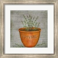 Herb Thyme Fine-Art Print