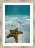 Bahamas, Marine Life, Sea star, Golden Rock Beach Fine-Art Print