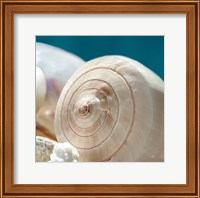 Shell Quartet Fine-Art Print