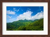 Puerto Rico, El Yunque National Forest, Rainforest Fine-Art Print