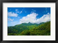 Puerto Rico, El Yunque National Forest, Rainforest Fine-Art Print