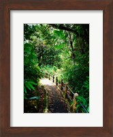 Puerto Rico, Luquillo, El Yunque National Forest path Fine-Art Print