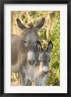 Mother and Baby Donkeys on Salt Cay Island, Turks and Caicos, Caribbean Fine-Art Print