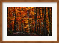 Forest Density Fine-Art Print