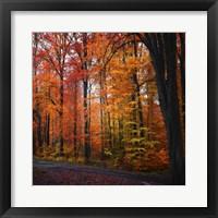 Rainbow Fall Fine-Art Print